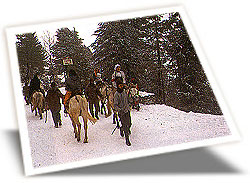 Shimla Tour Packages, Shimla Tour Operators